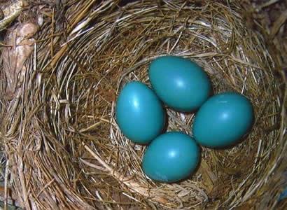 nest-eggs-410-crop-short